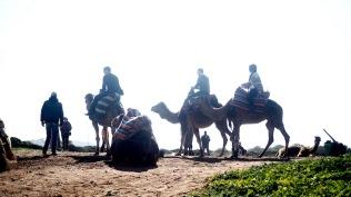 kahden euron kameliajelu