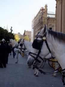 Hevoskärryjä katedraalilla