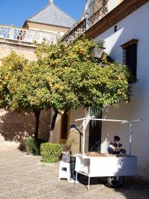 Isä ja poika ja appelsiinipuut