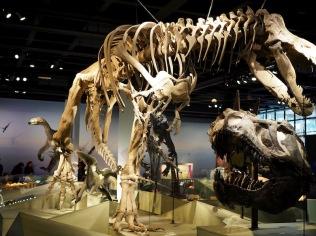 Fossiileja...