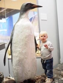 ...ja liittyi pingviiniyhdyskuntaan.
