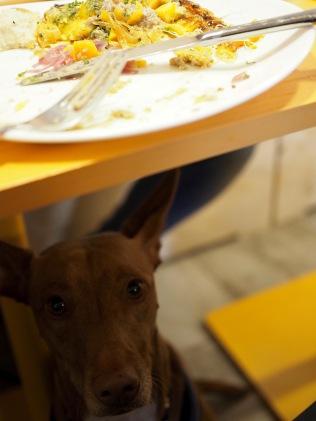 EGG-ravintola on koiraystävällinen!