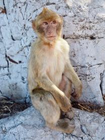 Epäileväinen apina
