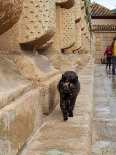 Alhambran kissat
