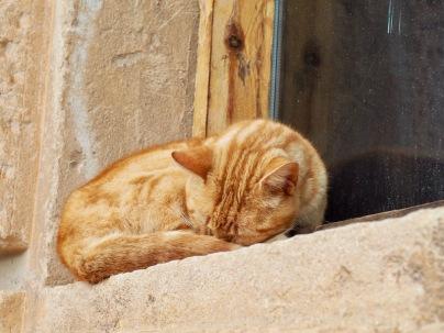 Kissat nukkuvat, rotat juoksevat kujilla