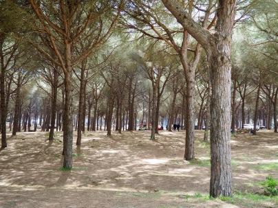 Pinar del Reys-metsä