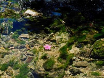Kukkia ja kirkasta vettä