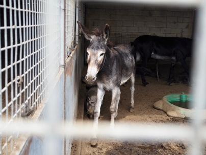 Hän asuu La Línean Prodean-tarhalla