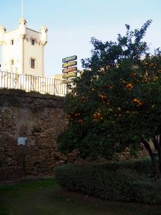 Appelsiinipuut