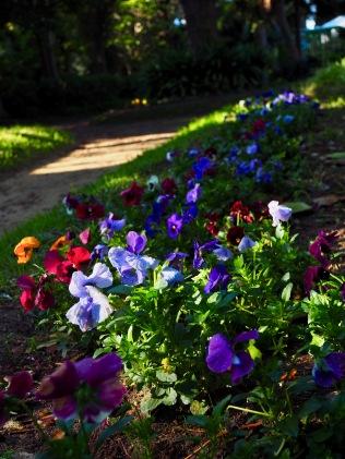 Ja kukkia