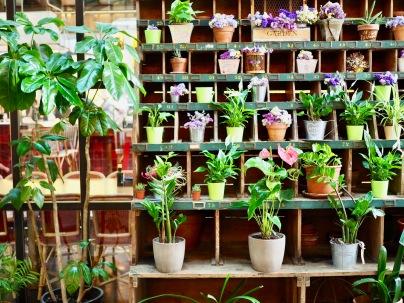 Kasveja sisääntulossa