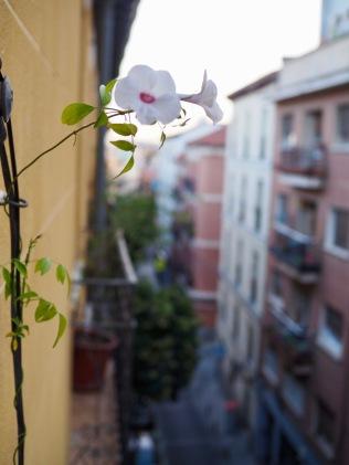Kukkia parvekkeella
